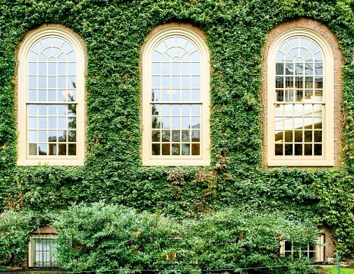 Ivy wall in Harvard